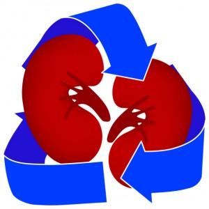 Kidney Medical Icon