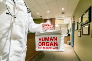 Transporting a Human Organ for Transplant